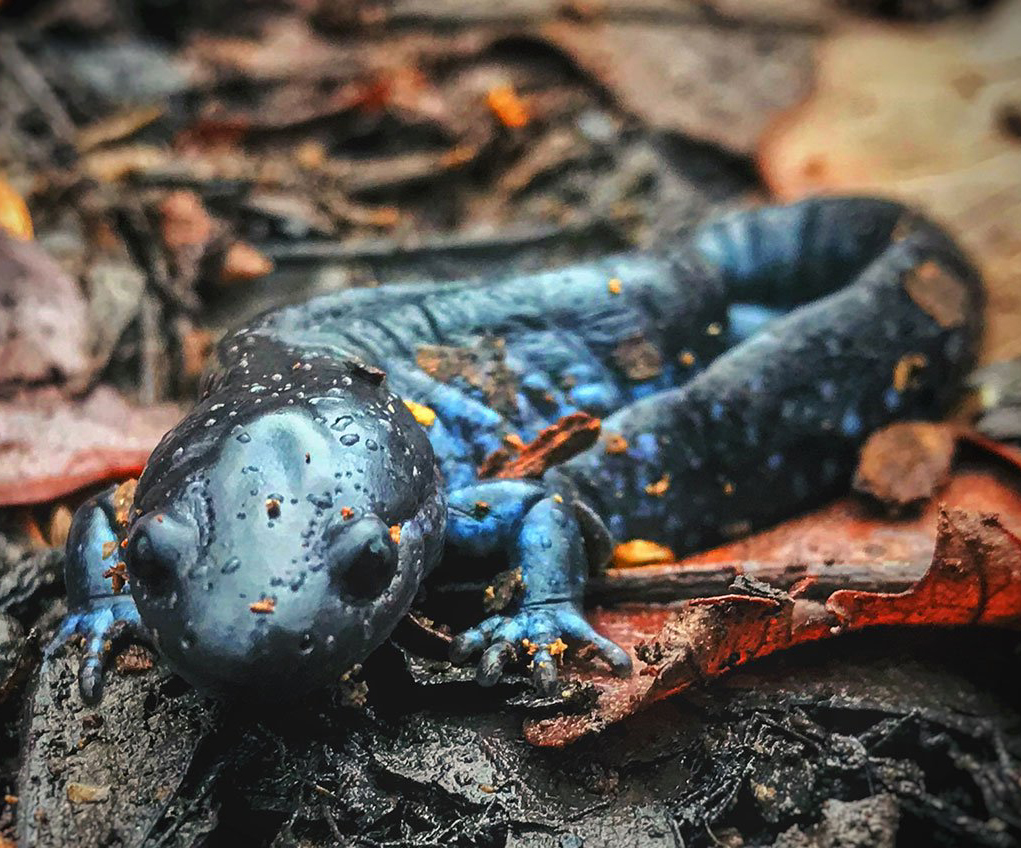 Photo of a salamander.